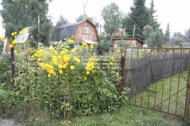 Работу дачных автобусов в Омске скоро отменят