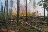 В Черниговской области в лесу произошел пожар - ГСЧС
