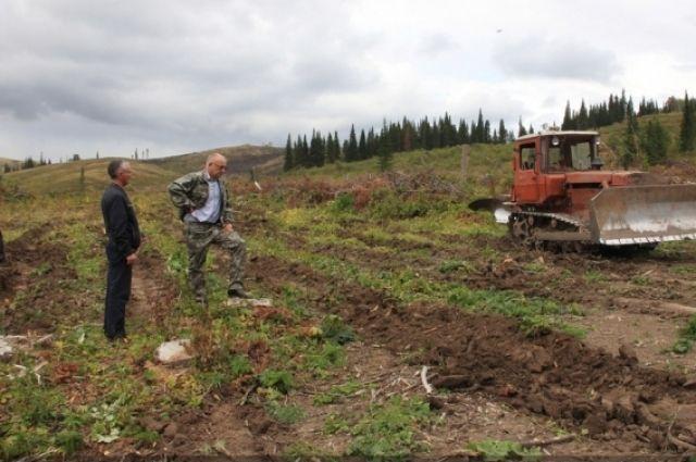 В Горно-Колыванском лесничестве начали приготовления к посадке молодых саженцев.