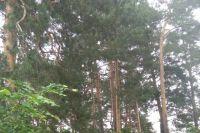 Грибник не смог найти дорогу из леса.