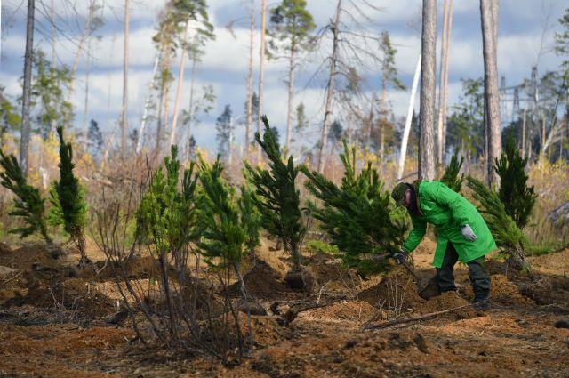 Сохраним лес. Масштабная экологическая кампания началась в России