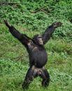 «Ты не пройдешь!» - Шимпанзендальф, страж бананов.