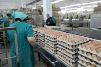 Тюменские яйцо и курица отправятся на Ближний Восток