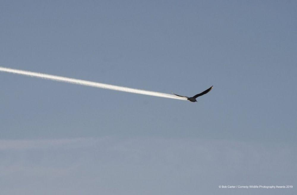 Новый авиалайнер: расход топлива - нулевой, работает за хлебушек, клювом не щелкает.