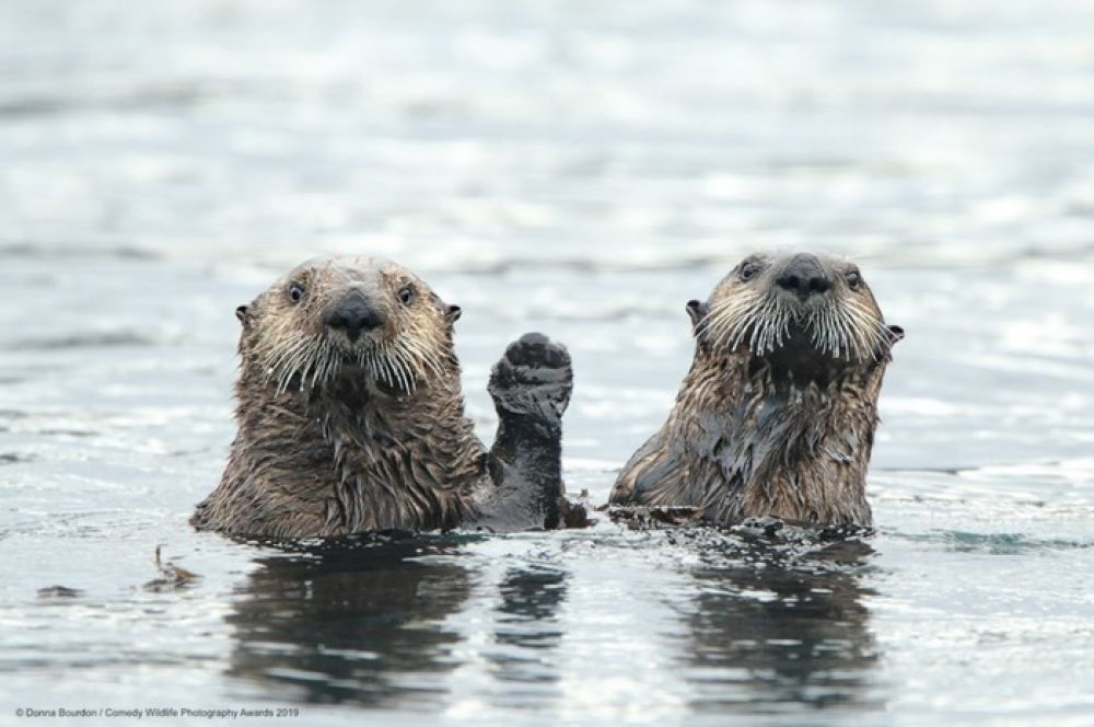 «Вступайте в партию «Выдры за рыбу!». Каждому вступившему - устрицы в подарок!» - эти агитаторы в любую нору залезут.