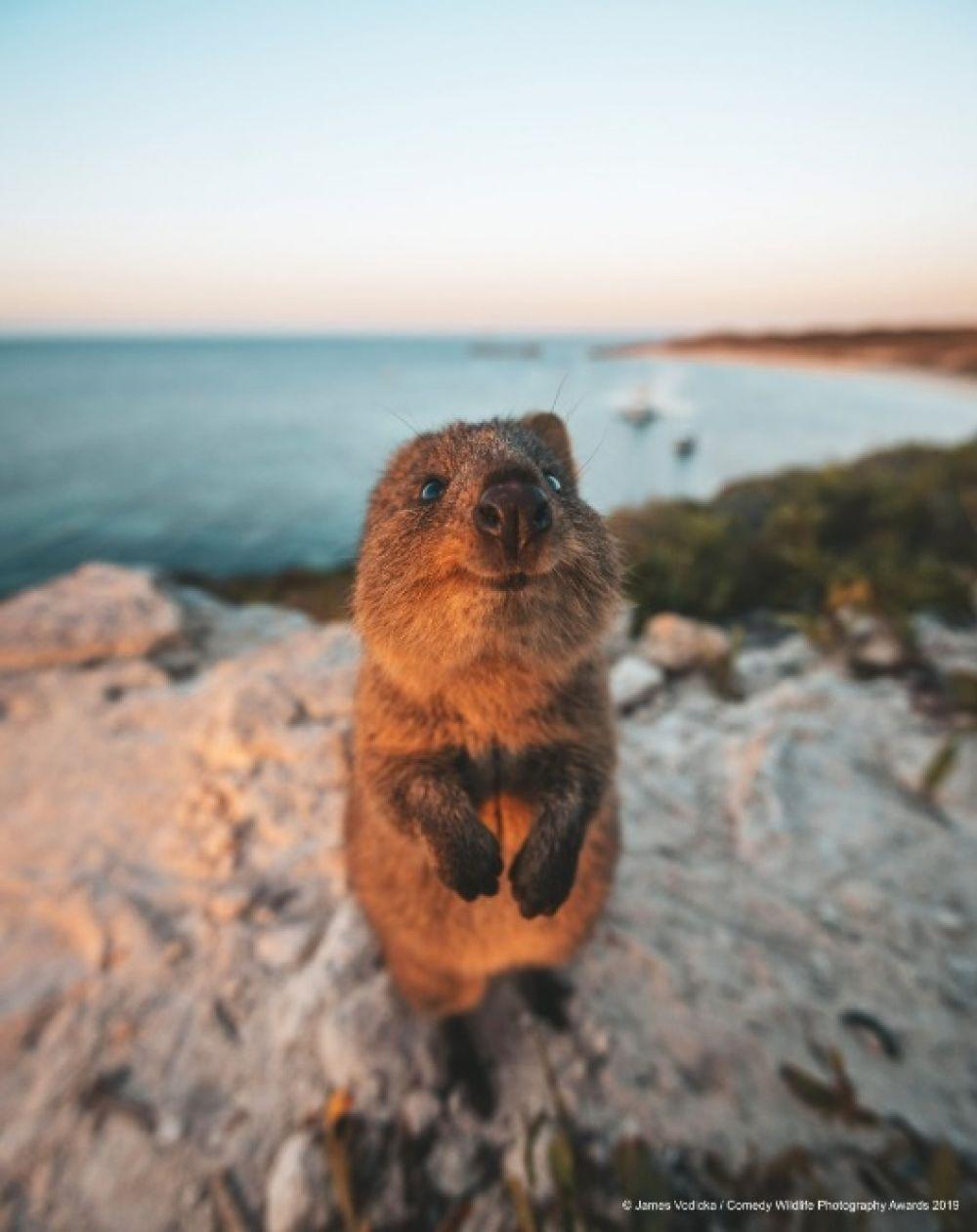 «А на том берегу точно Австралия?»