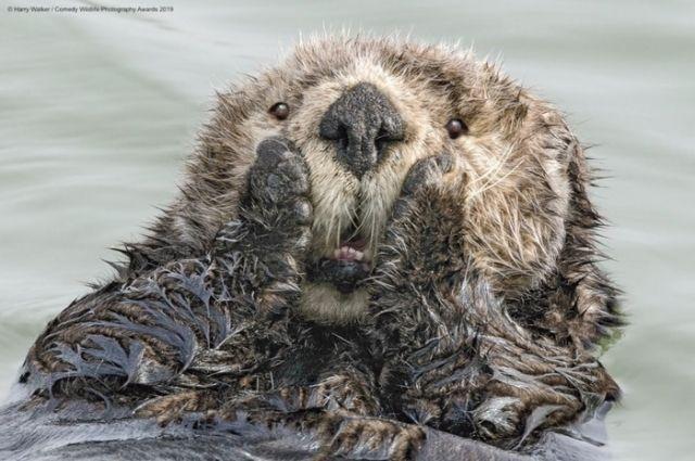 Comedy Wildlife Photography Awards-2019: самые смешные и забавные фото животных из мира дикой природы