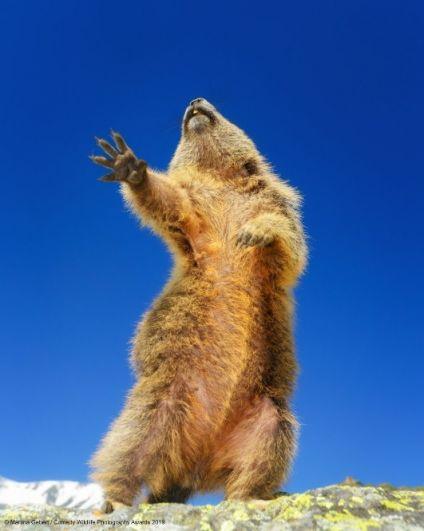 «О сооолеее, о сооолеее миоооо!» - зачем сдерживаться, если поет душа?