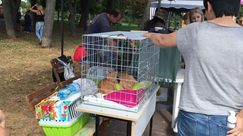 На фестивале можно было не только взять к себе домой маленького друга, но и пожертвовать приютам, приобрести сувениры, прослушать полезные тренинги для владельцев собак, мастер-классы по дрессуре, а также выбрать аксессуары, устроить пикник. Благодаря фестивалю, десятки бездомных животных нашли свой дом!