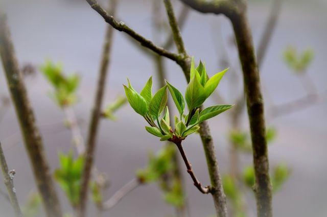 В омском парке высадят 300 деревьев разных пород
