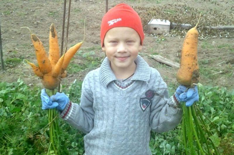 Участник №4 Екатерина Коновалова: «Урожай у дедушки в огороде!»