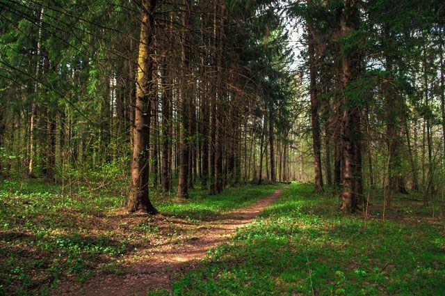 Круговорот воды в природе. Какую роль в этом играют леса?