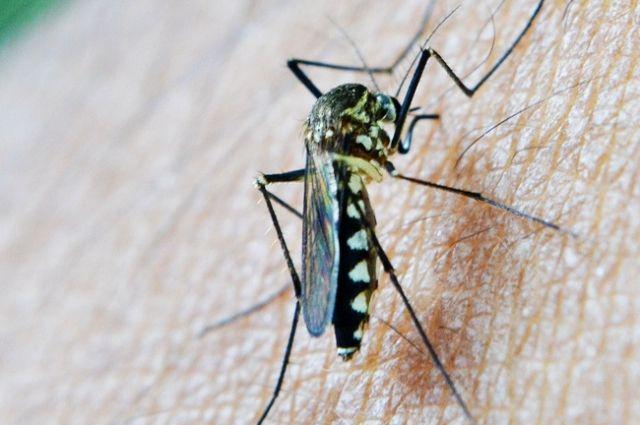 В Запорожье завезено два случая тропической малярии