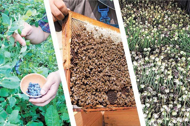 Прикамцы готовы насытить рынок местной ягодой, мёдом, овощами.