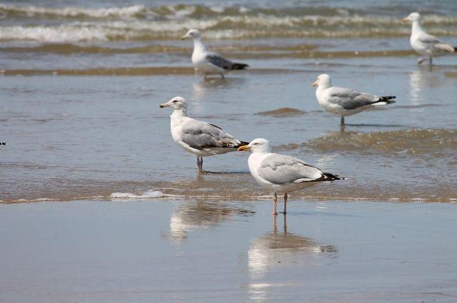 В Омской области исчезло 15 видов птиц
