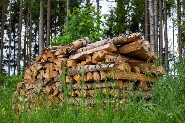 В Омской области стали реже воровать лес