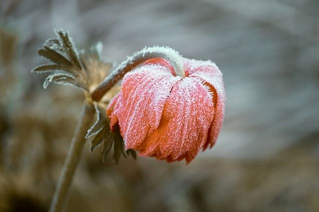На Омский регион идут заморозки до -5 градусов