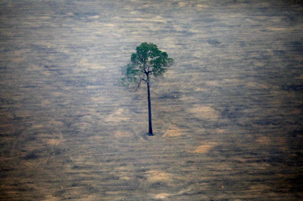 Аэрофотоснимок, показывающий обезлесение участка Амазонки возле Порто-Велью в Бразилии.