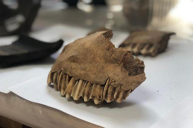Этим останкам как минимум 11 тысяч лет.