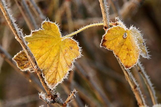 Шквальный ветер и холод: в ГСЧС предупредили об ухудшении погоды