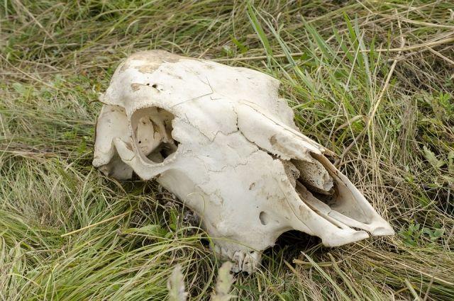 Использовать земли в границах 1000-метровой зоны сибиреязвенных скотомогильников опасно.