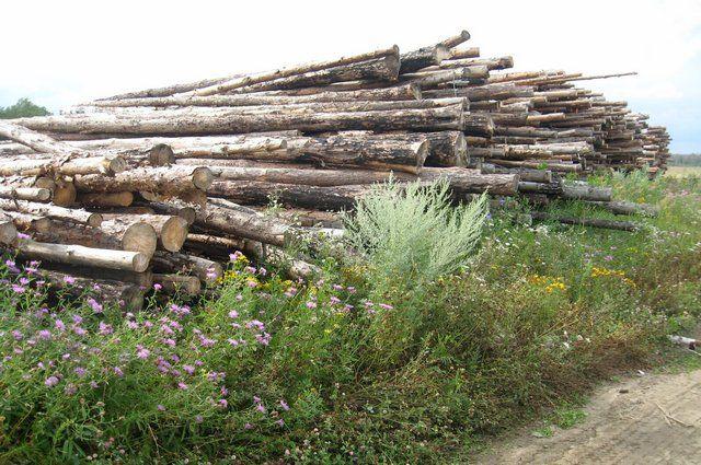 Сибирский лес интересует многих.