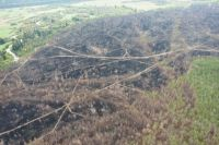 От леса осталось одно пепелище.