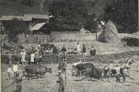 Обмолот пшеницы в горах, 1924 год.