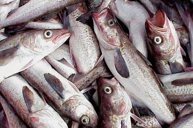 Жителей Ноябрьска повергла в шок фотография рыбы с личинками