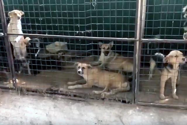 В пункт передержки в селе Тульском привозят бродячих собак, пойманных на улицах.