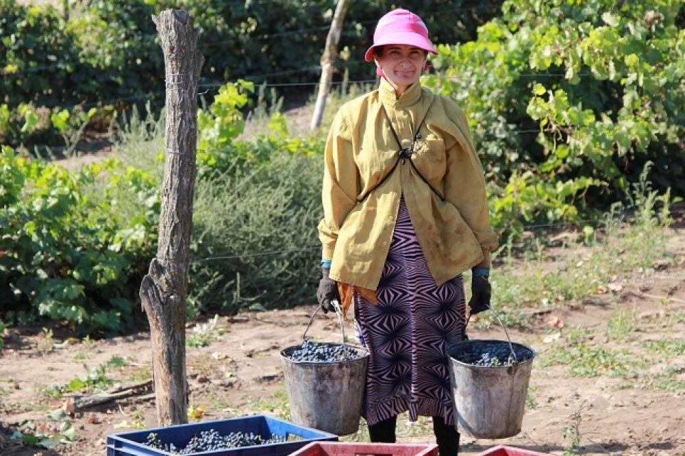 За последние три года сельхозорганизациями и крестьянскими (фермерскими) хозяйствами заложено 220 га молодых виноградников.