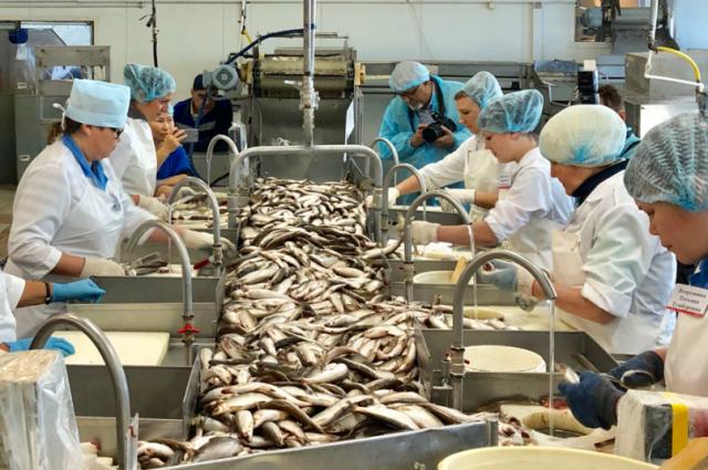 Ямальцев приглашают принять участие в конкурсе на лучшего обработчика рыбы