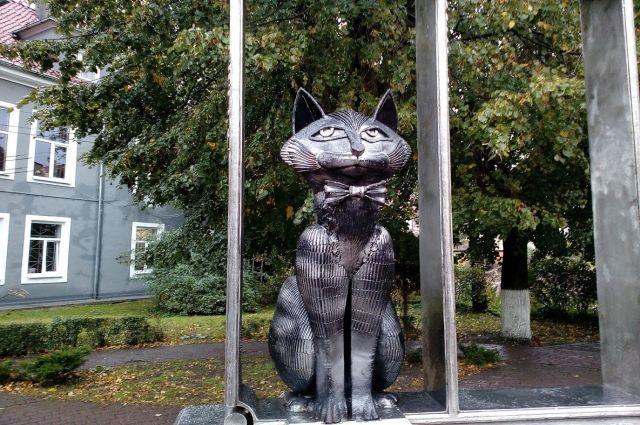 Зеленоградским котам будут проводить регулярный медосмотр
