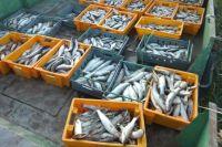 На Ямале браконьеры выловили рыбу на 1,1 млн рублей