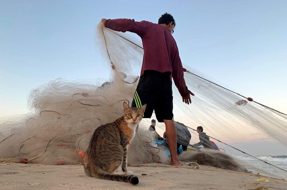 Рыбак и кошка на пляже в северной части сектора Газа.