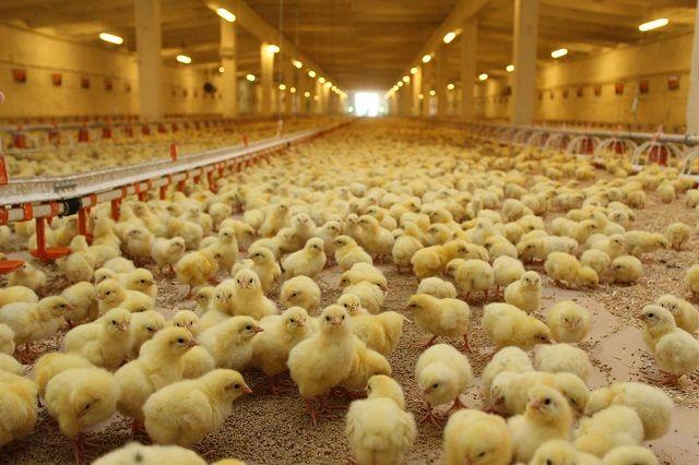 На тюменской птицефабрике появилось новейшее оснащение