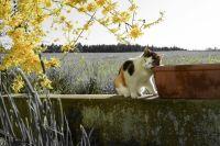 Характер кошек может быть таким же разношёрстным, как и их окрас.