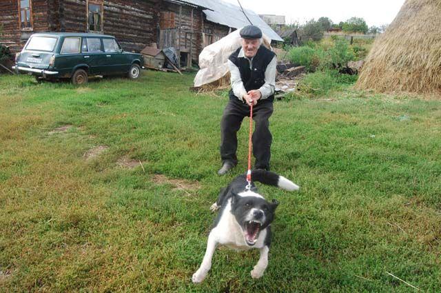 Если вас укусит собака, то с проблемами столкнётесь вы сами, а не хозяин животного.
