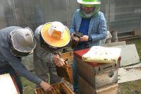 Пчеловоды отмечают сокращение выработки мёда.