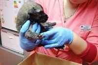 Два щенка выжили. После того как животным будет оказана медпомощь, им найдут хозяев.