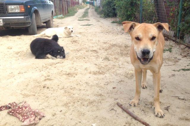 Собаки-бродяжки теперь объявлены привычными обитателями городской среды.
