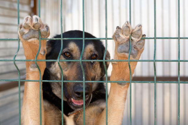 В Орске возобновляется отлов бездомных животных.