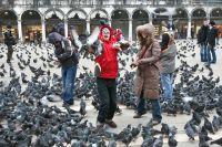 Прикасаться к голубям может быть небезопасно для здоровья.