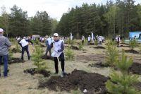500 тысяч деревьев высадили и в Красноярске.