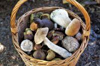 При запоздалой или неправильной первой помощи отравление грибами заканчивается летальным исходом в 50-60 % случаев.