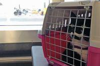 Хвостатый пассажир. О правилах перевозки животных в Украине и за границу