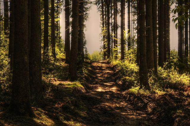 Вакцину от бешенства разложат в лесах Удмуртии