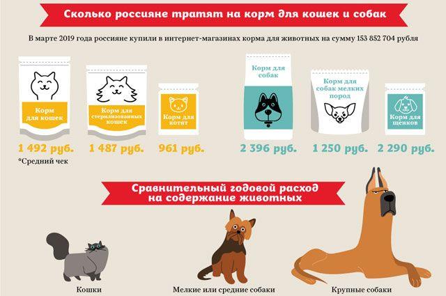 Штрих-кот. Зачем власть хочет чипировать домашних животных?   Природа   Общество   Аргументы и Факты