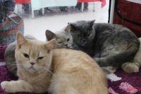 Бабушка живёт в антисанитарии вместе с 26 кошками.