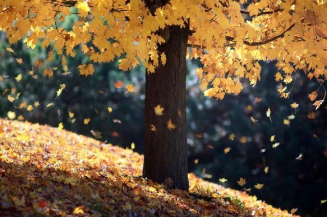 5 октября: праздники, именины, календарь, что сегодня нельзя делать